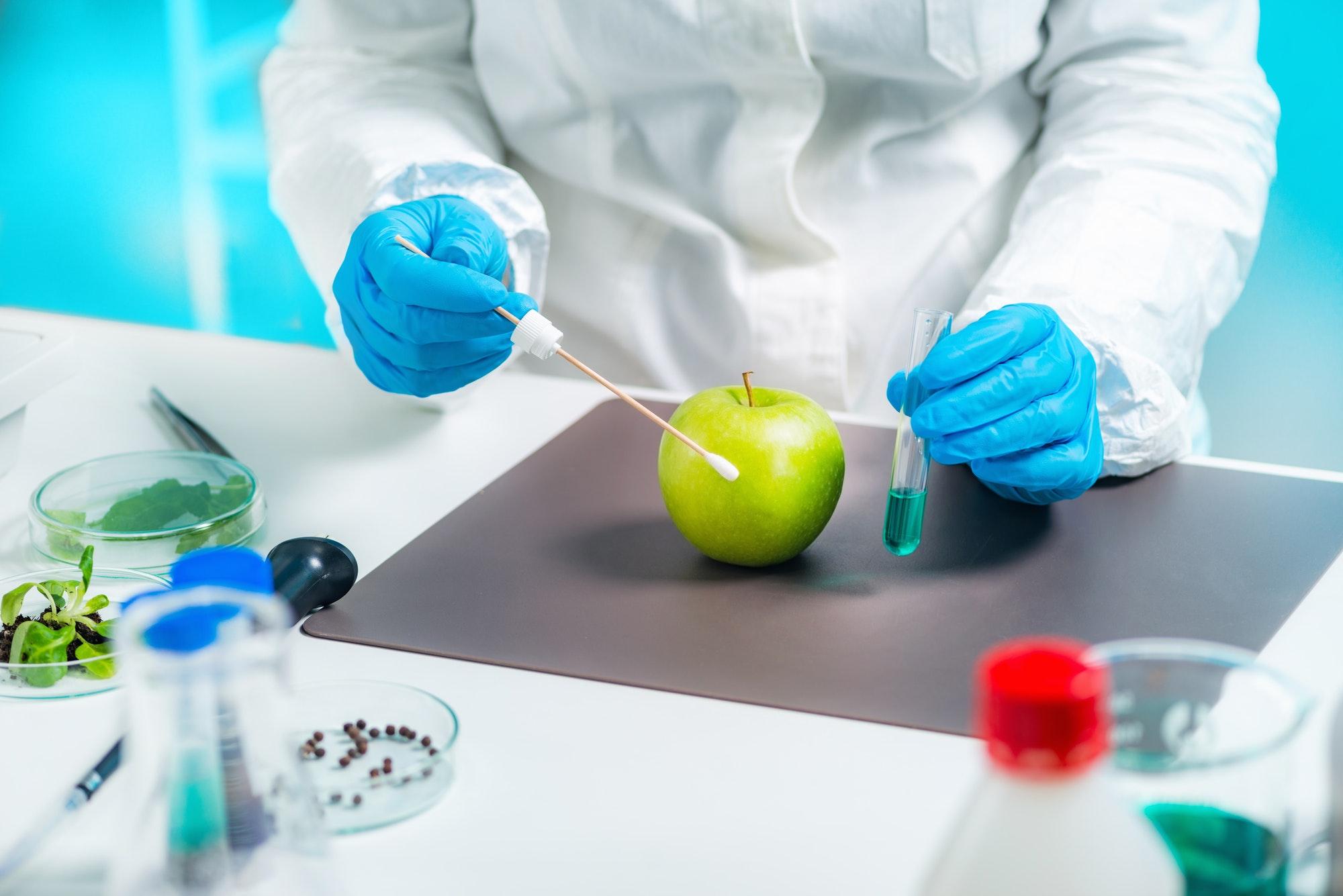 Biologist examining apple for pesticides